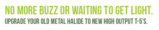 halidehead